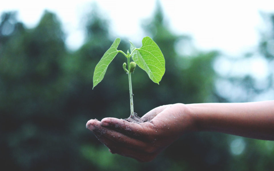 A picture of a small sapling in someone's hand, indicating growth